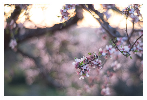 Everything is Peaches | by Paulemans