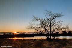 sunrise, zonsopkomst terhorsterzand