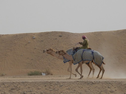 Al Marmoom Camel Racing Track - 5