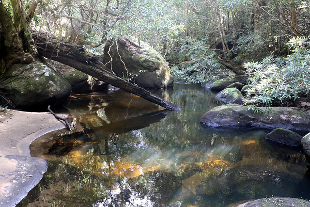 Water gums & the Hacking River (Tristaniopsis laurina) on the left