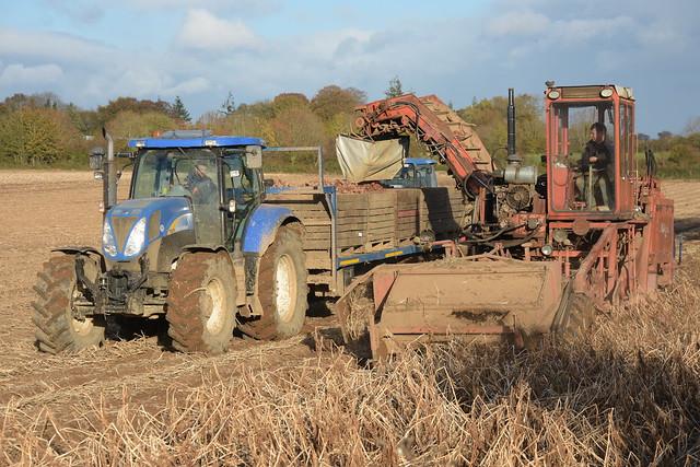 Amac ZM2 Self Propelled Potato Harvester filling Potato Box on a Smyth Trailer drawn by a New Holland T6070 Tractor