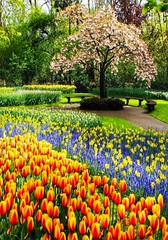 Landschaft - Tulpenbl�ten Park in Holland