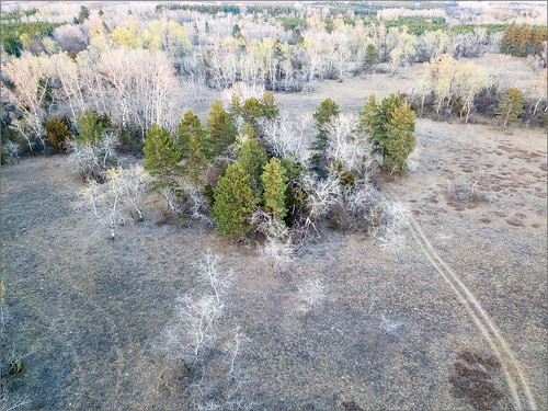 aerial aerialphotography forest hungary field tree nature landscape