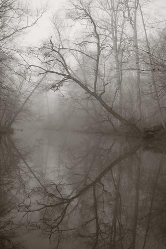 fog newhopecreek dukeforest centralnorthcarolina pentax k1 smcpentax13535mm iridientdeveloper