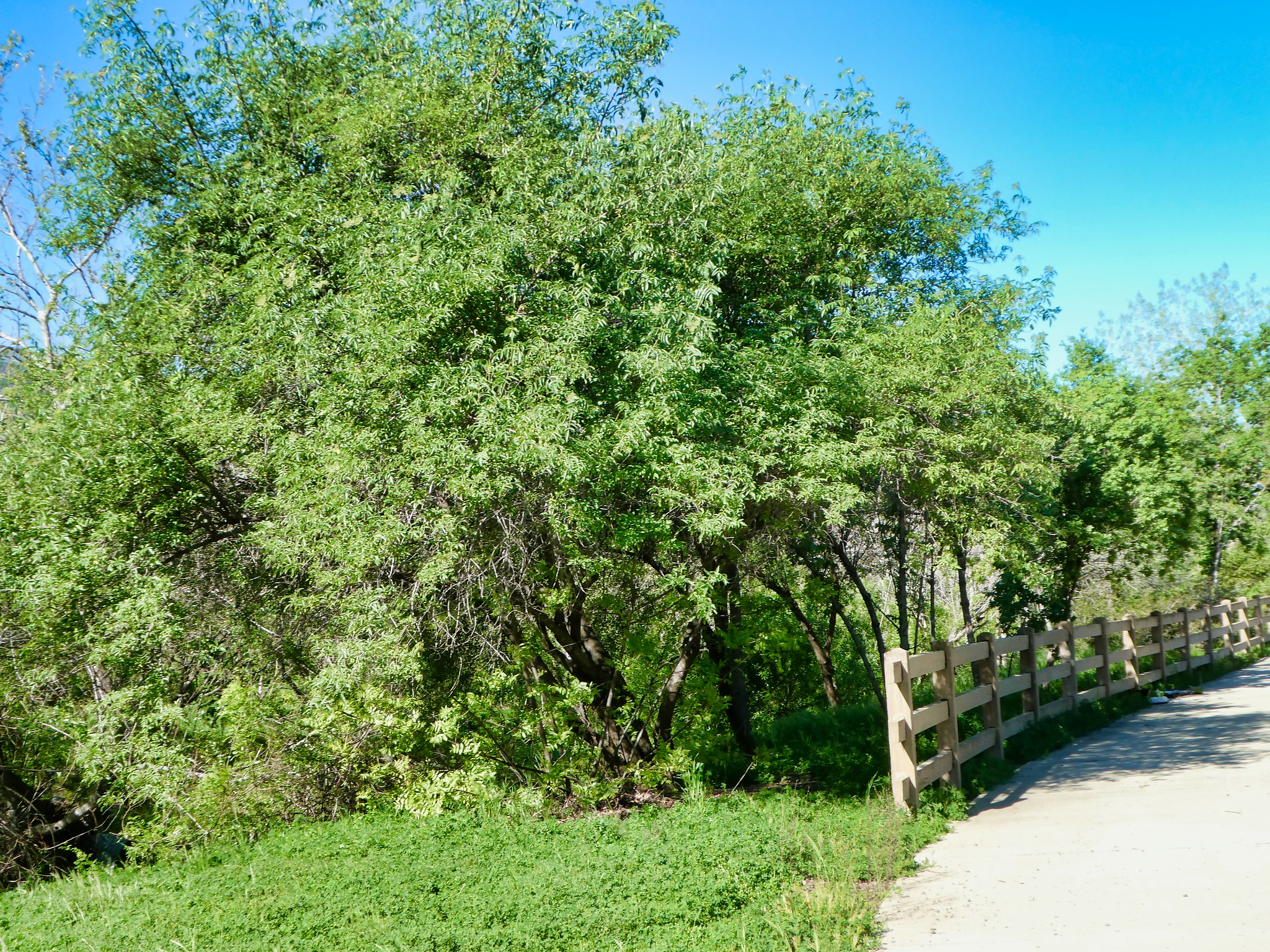 2019-04-09 - Outdoor Photography - Nature - Walking along the Catanzaro Trail, Part 2