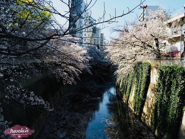 面影橋(荒川線)