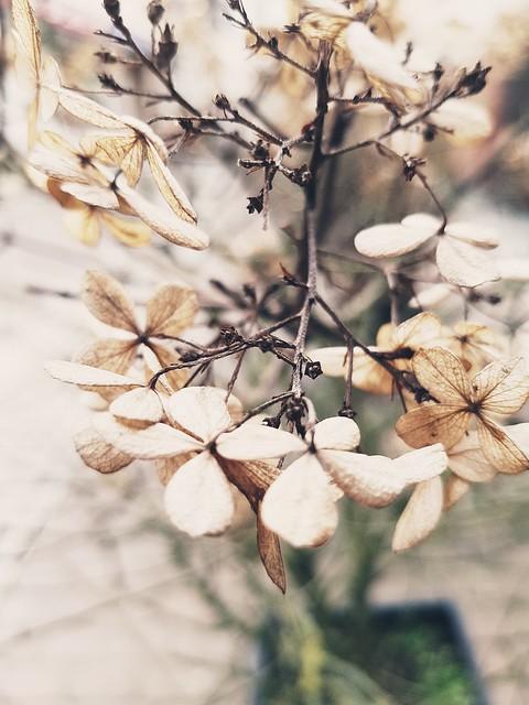 Blüte....