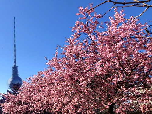 The spring is kissing Berlin! | by ANBerlin