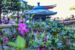 Pink Flower Japan Epcot | by gamecrew7