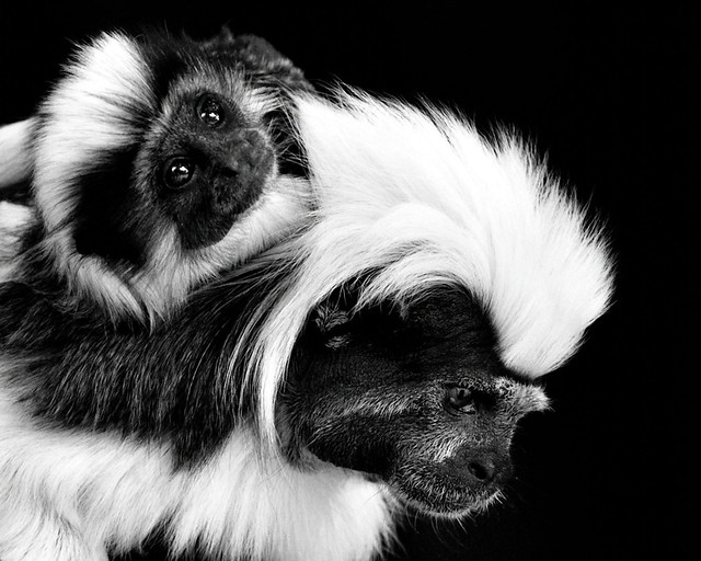Monkey N00069 Dalton Wildlife Park D210bob _DSC6708