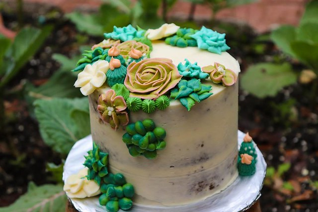 Succulent Cake by Abi Cakes
