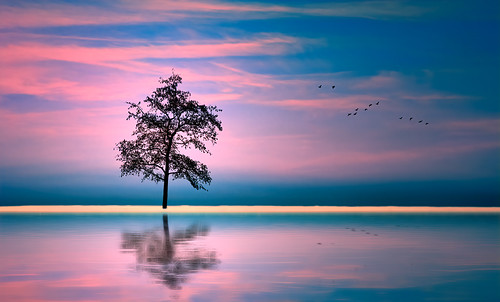 tree silhouette beach water reflection mood atmosphere clouds cloudage sunset dusk birds flight flying