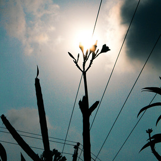 Composition | by srdinesh