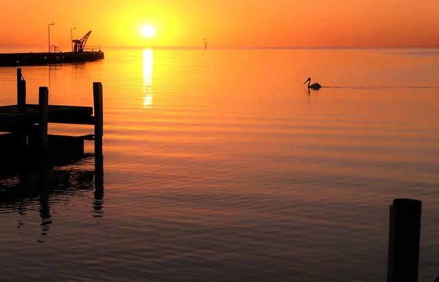 Pelican Dreaming, Lake Alexandrina, Milang, South Australia