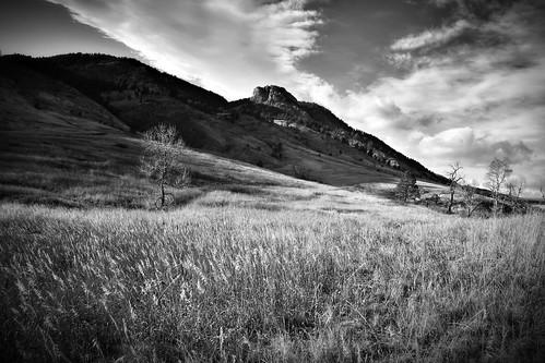 trees blackandwhite landscape colorado grass hills lorystatepark scenery