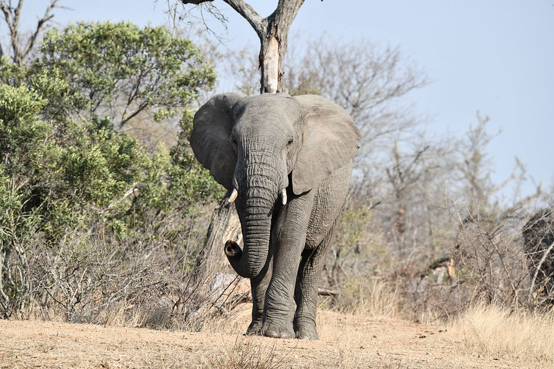 2289 Elephant