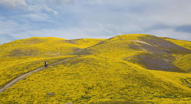Family Strolling Down Colorful Hillside