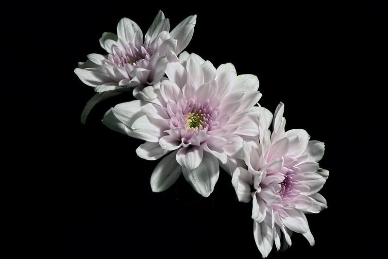 Обои цветы, природа, фон картинки на рабочий стол, раздел цветы - скачать