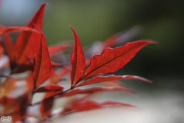 Bokeh in red