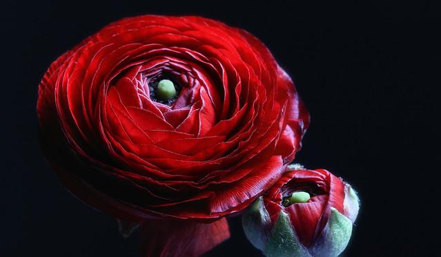 Friday's Flower Power ...