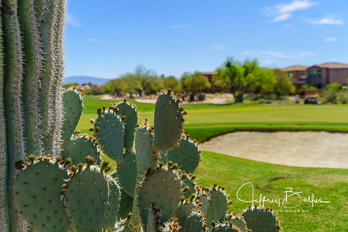 az lapaloma tucson a7m3 golf sony24240mm sony2470gm arizona unitedstatesofamerica us