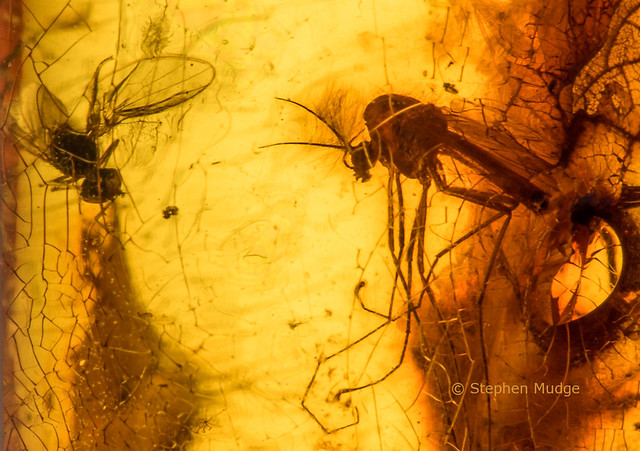 48 million year old insects