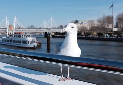Lontoo 2/2019   by anskubcn