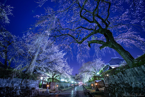 Taisekiji temple in the spring night