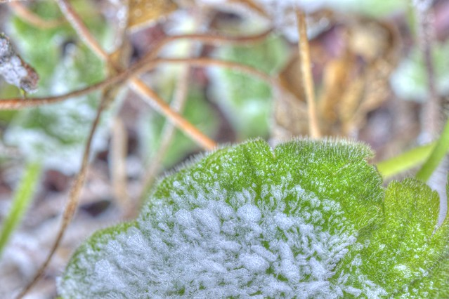 Frostiges Blatt