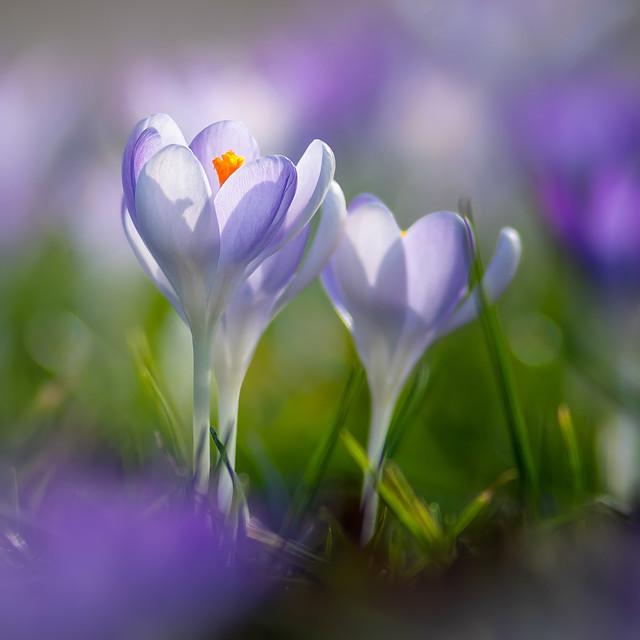 Dreamy spring...