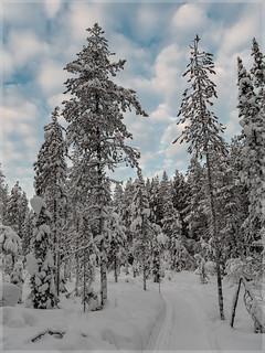 Ylläs-Finnland_92539 | by uwe_cani