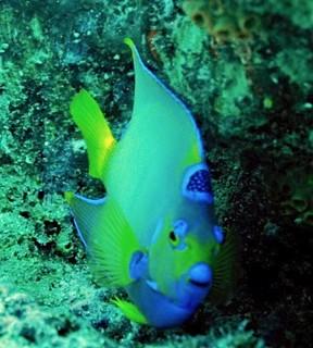 Aruba scuba shots videos 377 - Version 2