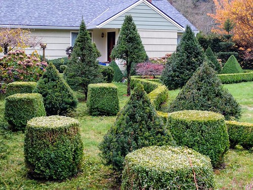Topiary | by Oregon Coastal Flowers