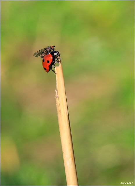 Fly and Ladybird.