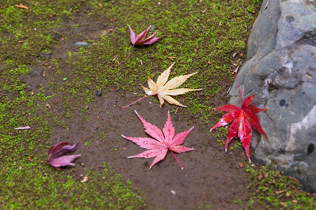 Five leaves and a rock on moss