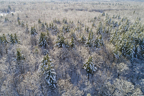 winter cold winterwonderland christmas holiday break newyears 2019 life nature outdoors aerial snow trees forest drone drones dji woodland landscape peaceful
