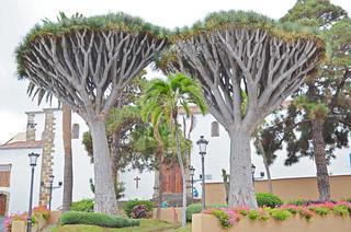 The Twins, Los Realejos, Tenerife | by BuzzTrips
