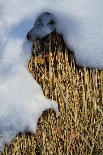 eechillington nikond7500 viewnxi utah mountolympus hiking snow patterns grass death nature