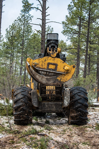 usdepartmentofagriculture unitedstatesdepartmentofagriculture usda departmentofagriculture forest nationalforest usforestservice fsâforestserviceâ unitedstatesforestservice apache sitgreaves nationalforests fellerbuncher grappleskidder harvester