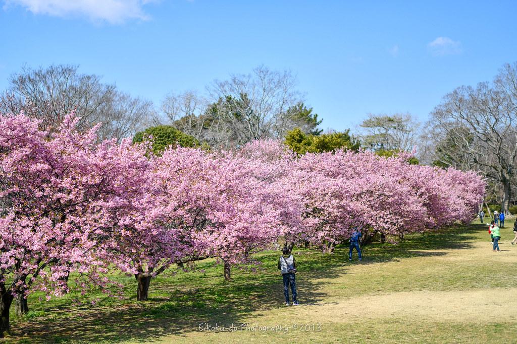 Sakura Castle Park
