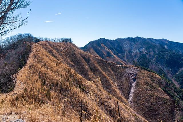 振り返り・・伐採帯と有間山稜