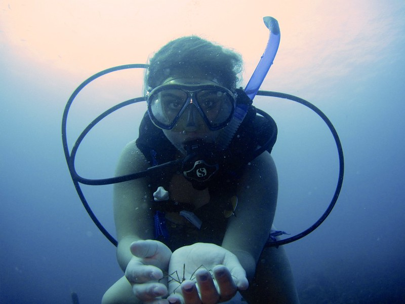 G-July 11th 2012 La Boca Diving Pedro 2530