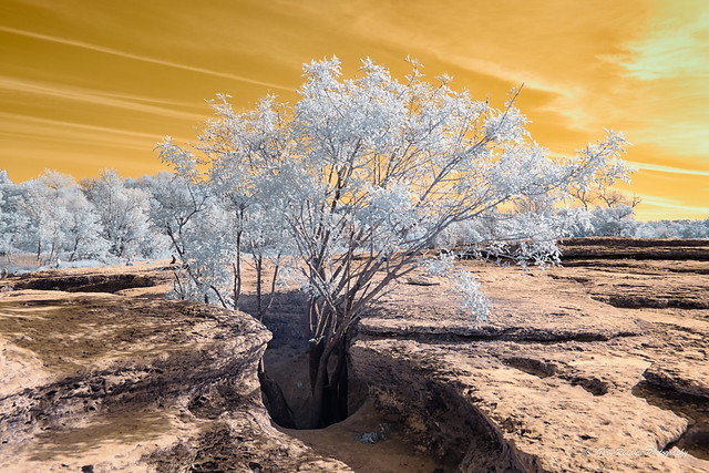 Infrared Photo - McKinney Falls State Park - Modified Nikon D3300 with Supercolor 590 nm filter