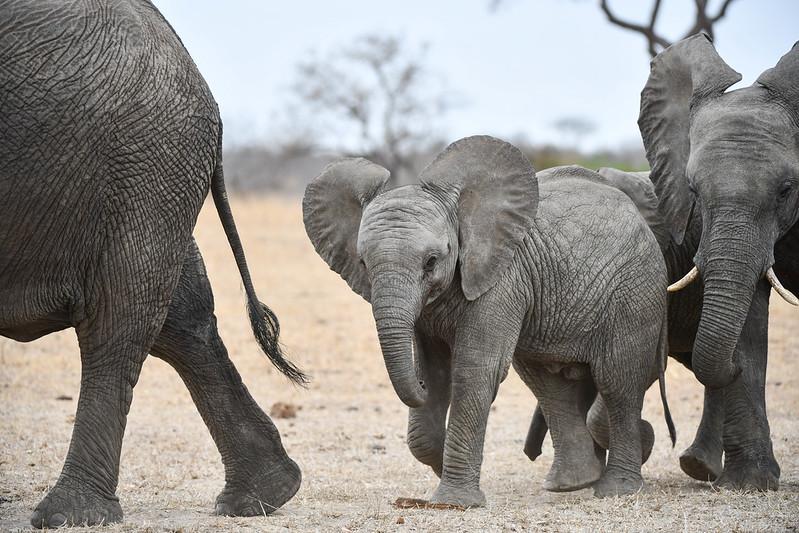 2258 Elephant