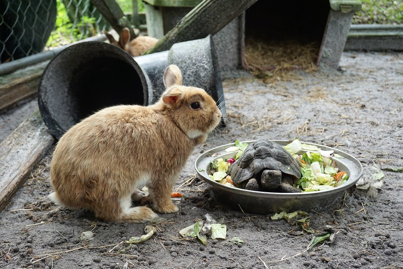 Greek Tortoise & Rabbit - Lions, Tigers & Bears Inc., Arcadia, Fla., April 14, 2019