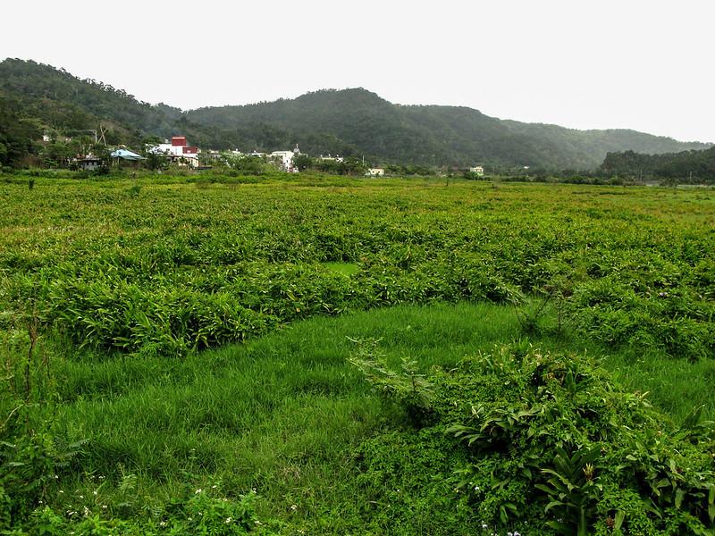 東源村水上草原