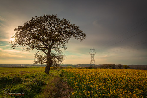 clouds fields moody plants pylons rapeseed sky tracks trees yellow