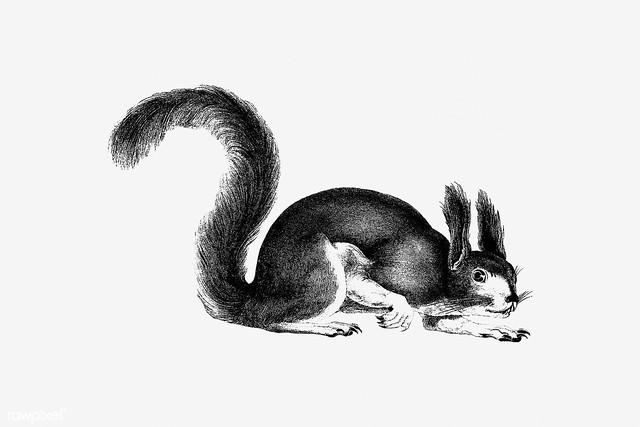 Squirrel shade drawing