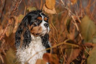 Caché dans ls feuilles | by TheLittlePaws