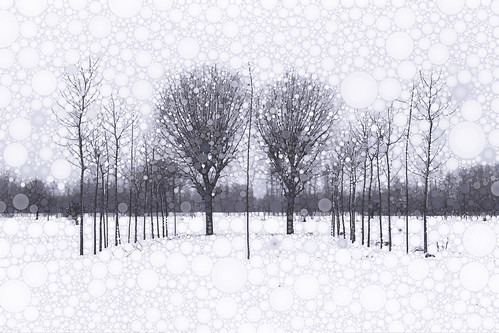 The Scent of Snow | by Susan Maxwell Schmidt